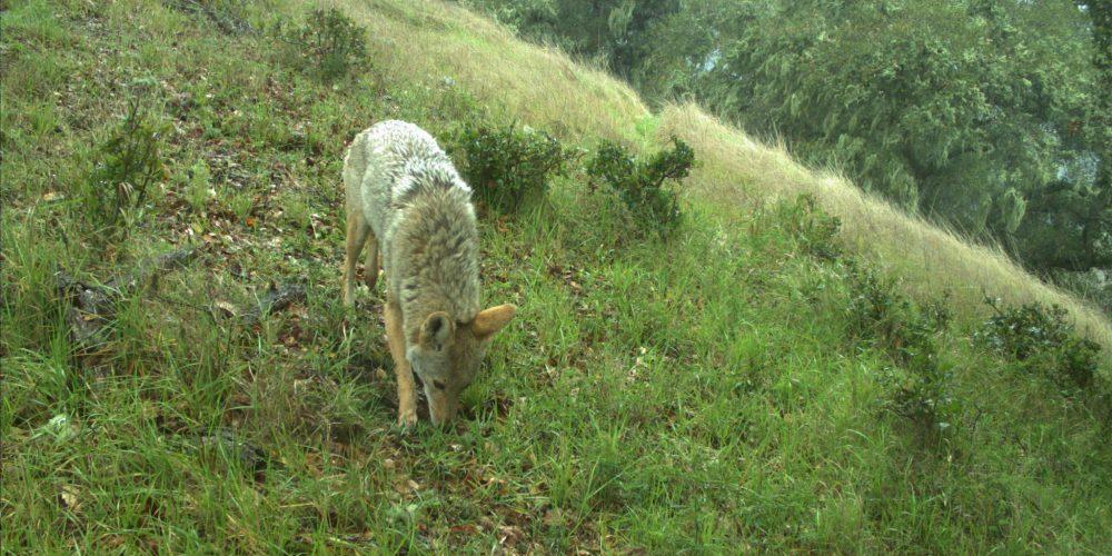 Photo: Wildlife Camera